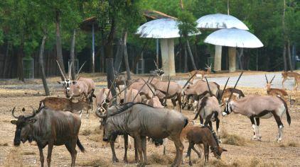 曼谷 野生动物世界 (1).jpg