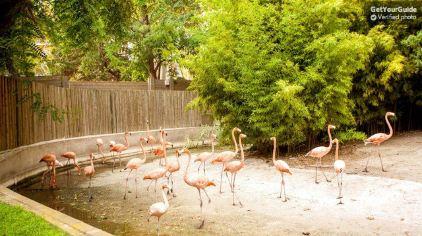 巴塞罗那动物园3.jpg