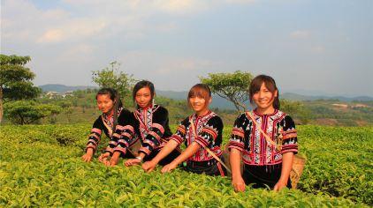 茶博苑 22%.jpg