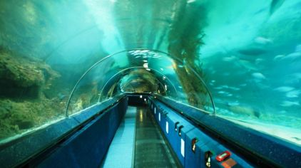 凯利塔顿海底世界1.jpg
