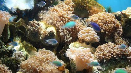 小梅沙海洋世界 (8).jpg