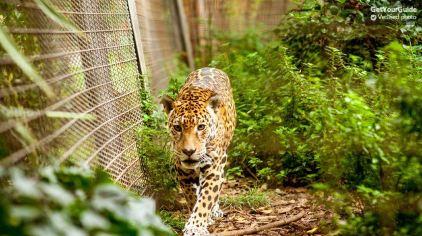 巴塞罗那动物园4.jpg