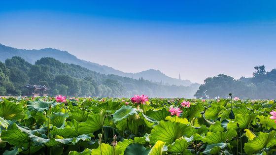 杭州茅家埠午餐+飛來峰+法雲古村+西湖遊船+雷峰塔一日遊(10人包團)