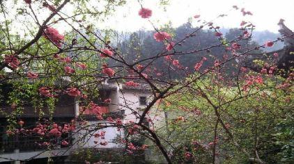 绩溪紫园 (3).jpg