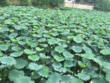 遗爱湖-黄冈-徐旭