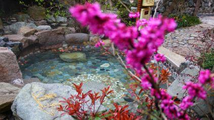 黄山温泉 (2).jpg