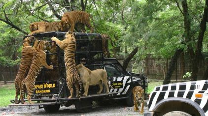 曼谷 野生动物世界 (7).jpg