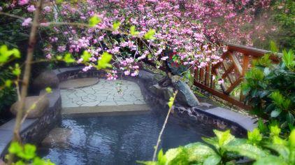 黄山温泉 (3).jpg