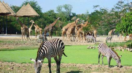 曼谷野生动物园.jpg