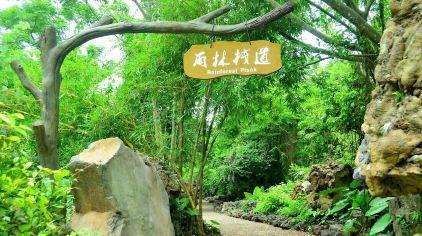 雨林栈道.jpg