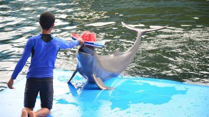 芭堤雅海豚世界6.jpg