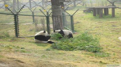 长沙生态动物园19.jpg