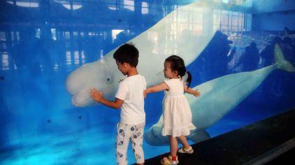 白鲸.jpg