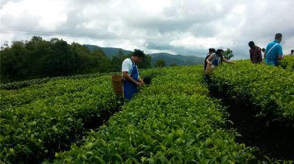 茶博苑 11%.jpg