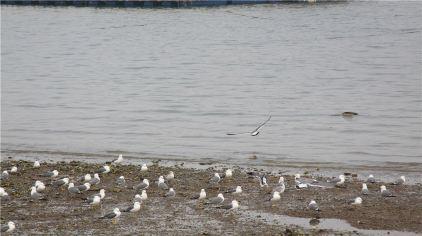 金石滩喂海鸥 (2).jpg
