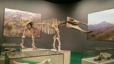 古动物化石博物馆-临夏-zhan****5095