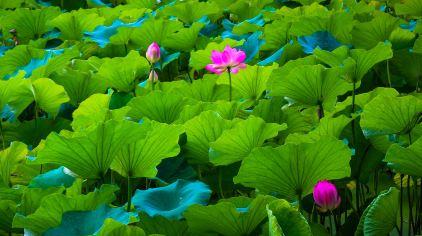 云南 昆明 翠湖公园