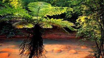 赤水桫椤景区2-5.jpg