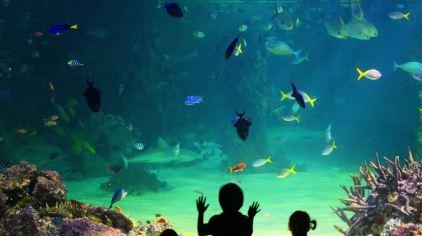 凯利塔顿海底世界3.jpg