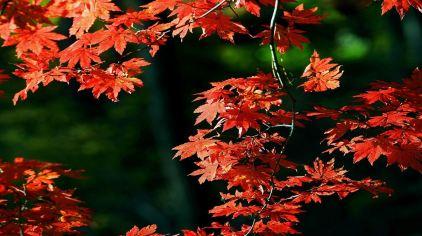 嵩山红叶-295l0006