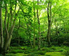 天龙寺-京都-绿茶慕司