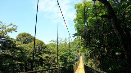 雅安蒙顶山树冠漫步2