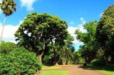 庞普勒斯植物园-毛里求斯-200****612