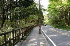 箱根旧街道杉并木-箱根-eigo