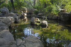 趵突泉景区-济南-doris圈圈