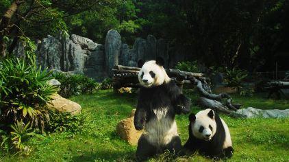 深圳野生动物园 (5)
