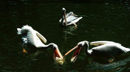 深圳野生动物园 (7)