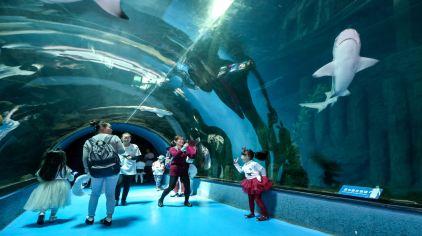 杭州极地海洋公园 (13)