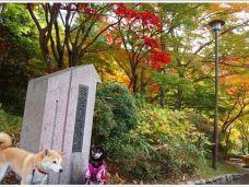 瑞宝寺公园-神户-黑瞳孔的猫