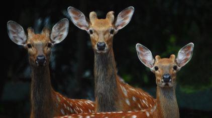 深圳野生动物园 (2)