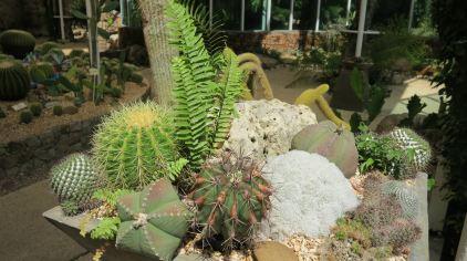普吉岛植物园 (6)