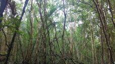 民丹红树林探索游