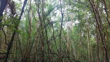 民丹红树林探索游-民丹岛-KinKiRain