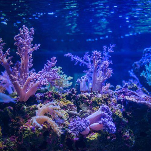Sumida Aquarium Ticket
