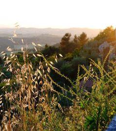 锡耶纳游记图文-托斯卡纳艳阳下的暮光之城-意大利托斯卡纳深度游
