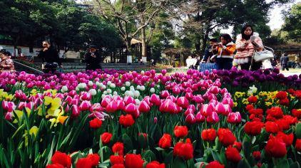 武汉植物园 (7)