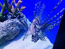 马尼拉海洋公园-马尼拉-泡饭鱼翅