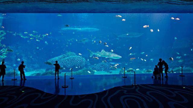 珠海玩人均_珠海日月贝