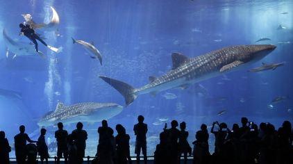 冲绳美丽海水族馆2.jpg