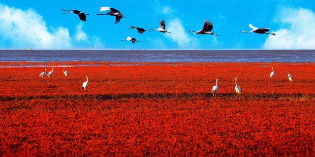 """红海市场和蓝海市场_商场上什么叫""""红海""""""""蓝海""""?-商业中的蓝海和红海是什么 ..."""
