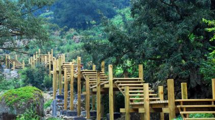 香榧国家森林公园