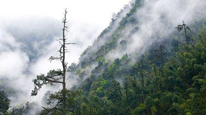 原始森林.jpg