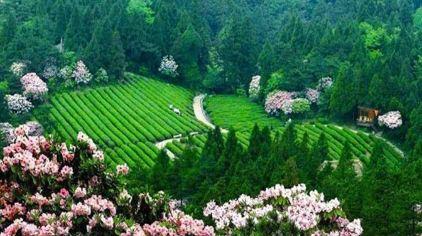 天台山华顶国家森林公园2.jpg
