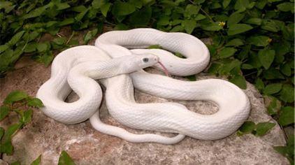 博物馆内-白蛇.jpg