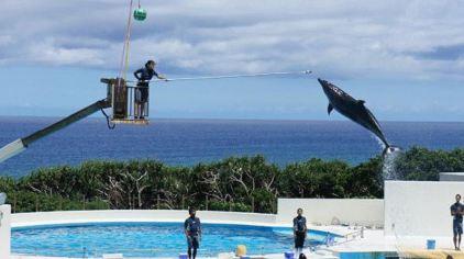 冲绳海洋博物会纪念公园2.jpg