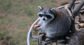 威海西霞口神雕山野生动物园成人票